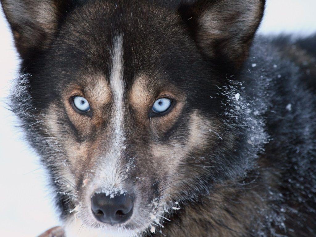 Engholm Husky winter 1051 red 1 komprimert2 2 2 2