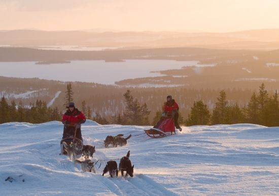 Harriniva Dog sledding with sunset