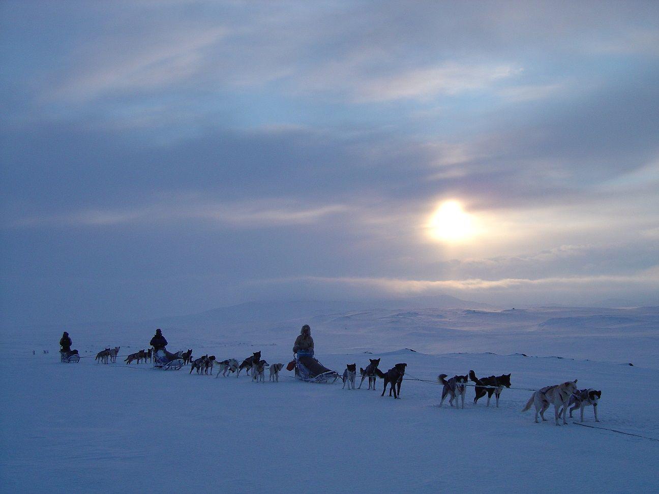 Karasjok Husky Safari to Alta Credit Engholm Husky 2w 2 2 2