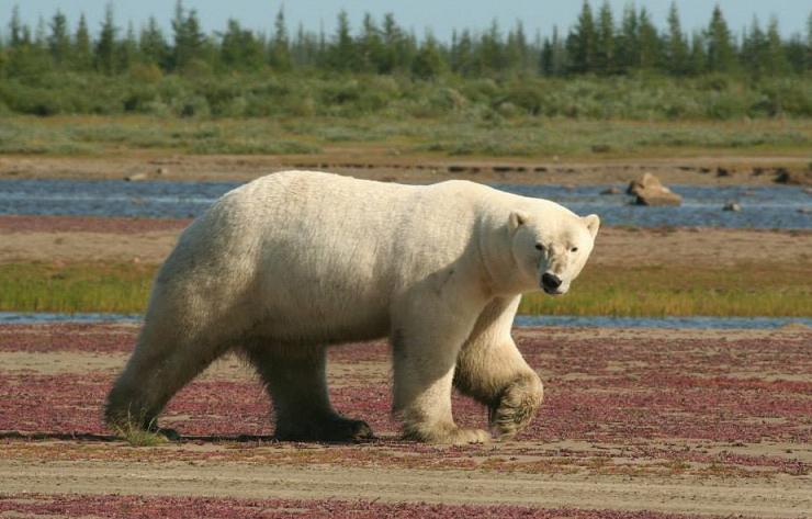 polar b