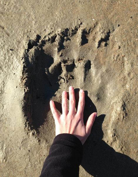 polar bear hand