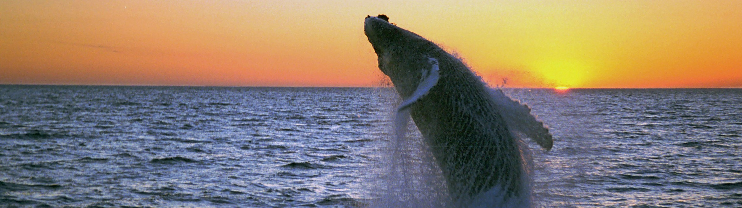 iceland_is-humpback-midnight-jump-fixed.jpg Credit Iceland Pro Travel