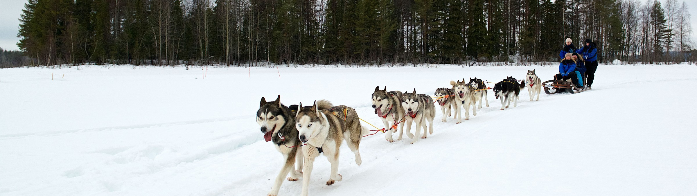 2015, February, Huskies, Lulea, Sorbyn